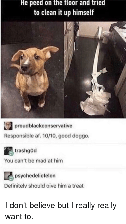 Good Doggo: He peed on the floor and tried  to clean it up himself  proudblackconservative  Responsible af. 10/10, good doggo  trashgOd  You can't be mad at him  psychedelicfelon  Definitely should give him a treat I don't believe but I really really want to.