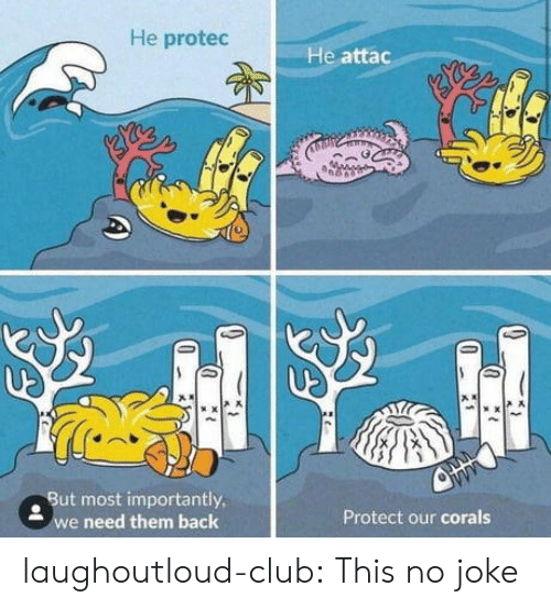Club, Tumblr, and Blog: He protec  He attac  . But most importantly  e need them back  Protect our corals laughoutloud-club:  This no joke