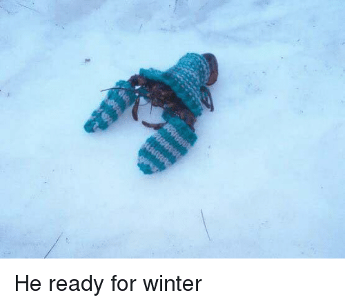 Winter, For, and  Ready: He ready for winter