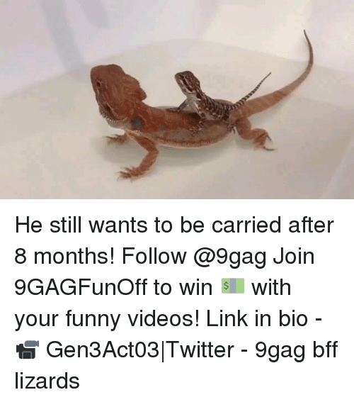 your funny: He still wants to be carried after 8 months! Follow @9gag Join 9GAGFunOff to win 💵 with your funny videos! Link in bio - 📹 Gen3Act03|Twitter - 9gag bff lizards