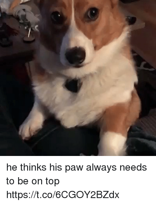 Funny, Top, and Tops: he thinks his paw always needs to be on top https://t.co/6CGOY2BZdx