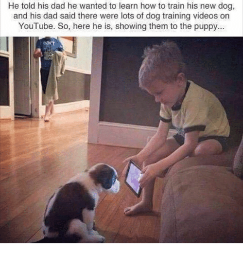 Dad, Memes, and Videos: He told his dad he wanted to learn how to train his new dog,  and his dad said there were lots of dog training videos on  YouTube. So, here he is, showing them to the puppy...