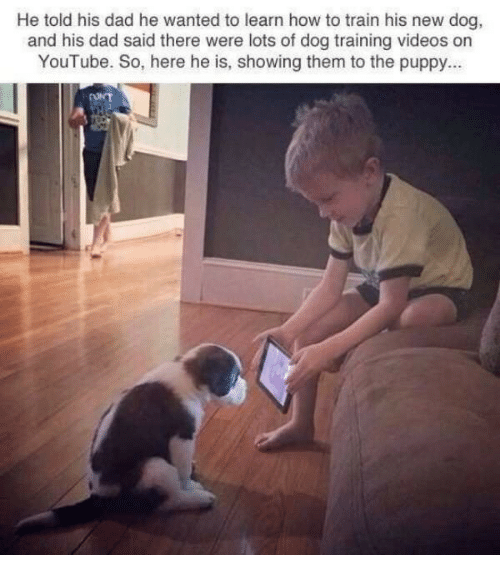 Dad, Videos, and youtube.com: He told his dad he wanted to learn how to train his new dog  and his dad said there were lots of dog training videos on  YouTube. So, here he is, showing them to the puppy..