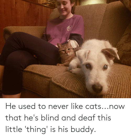 deaf: He used to never like cats...now that he's blind and deaf this little 'thing' is his buddy.
