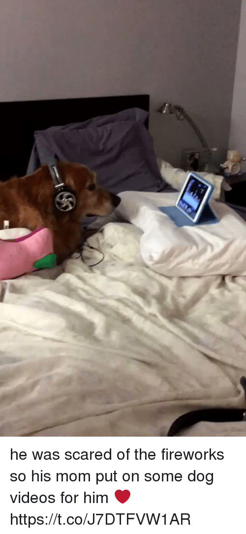 Dogs, Videos, and Fireworks: he was scared of the fireworks so his mom put on some dog videos for him ❤️  https://t.co/J7DTFVW1AR