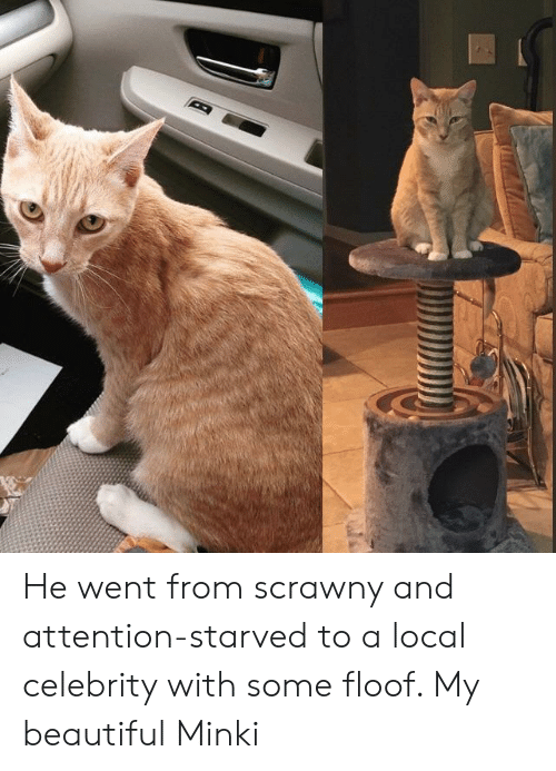 Beautiful, Local, and Celebrity: He went from scrawny and attention-starved to a local celebrity with some floof. My beautiful Minki