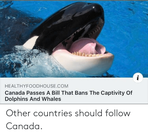 Canada, Dolphins, and Com: HEALTHYFOODHOUSE.COM  Canada Passes A Bill That Bans The Captivity Of  Dolphins And Whales Other countries should follow Canada.