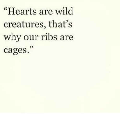 "Hearts, Wild, and Creatures: ""Hearts are wild  creatures, that's  why our ribs are  cages  93"