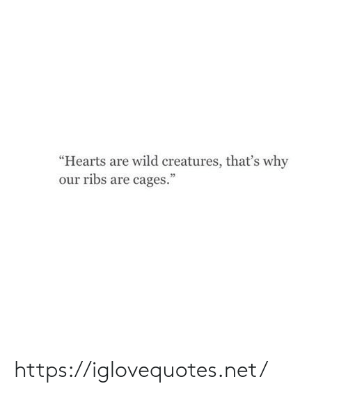 "Hearts, Wild, and Net: ""Hearts are wild creatures, that's why  our ribs are cages."" https://iglovequotes.net/"