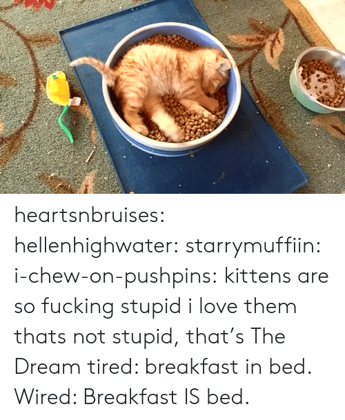Breakfast In Bed: heartsnbruises:  hellenhighwater:  starrymuffiin:  i-chew-on-pushpins: kittens are so fucking stupid  i love them    thats not stupid, that's The Dream  tired: breakfast in bed. Wired: Breakfast IS bed.