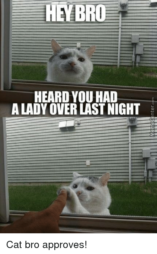 Approvation: HEEBRO  HEARD YOU HAD  A LADY OVERLAST NIGHT Cat bro approves!