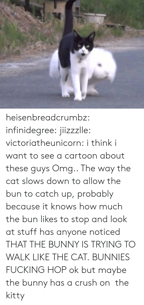 Bunnies, Crush, and Fucking: heisenbreadcrumbz: infinidegree:  jiizzzlle:  victoriatheunicorn:  i think i want to see a cartoon about these guys  Omg.. The way the cat slows down to allow the bun to catch up, probably because it knows how much the bun likes to stop and look at stuff  has anyone noticed THAT THE BUNNY IS TRYING TO WALK LIKE THE CAT. BUNNIES FUCKING HOP   ok but maybe the bunny has a crush on the kitty