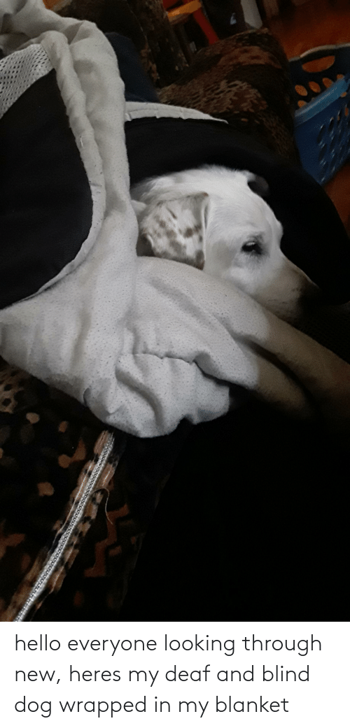 deaf: hello everyone looking through new, heres my deaf and blind dog wrapped in my blanket
