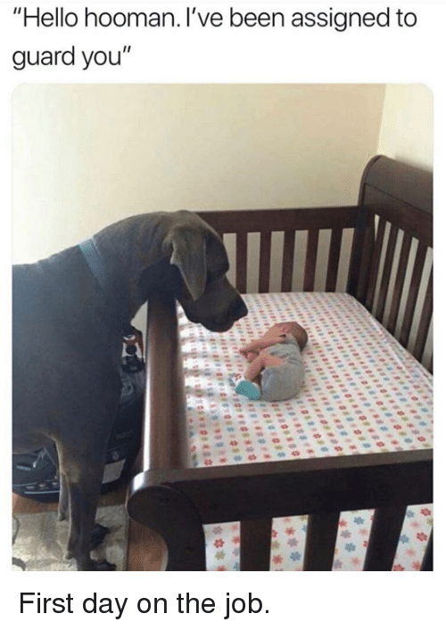 """Dank, Hello, and Been: Hello hooman. I've been assigned to  guard you"""" First day on the job."""