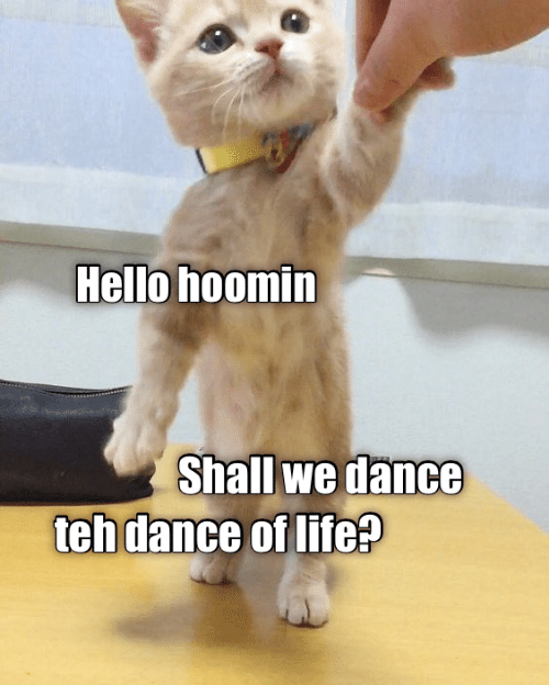 Shall We: Hello hoomin  Shall we dance  teh dance of life?
