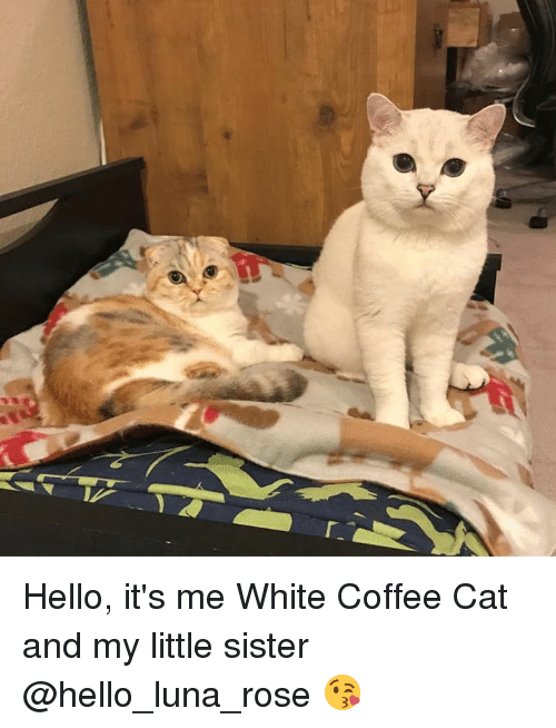 Hello, Memes, and Coffee: Hello, it's me White Coffee Cat and my little sister @hello_luna_rose  😘