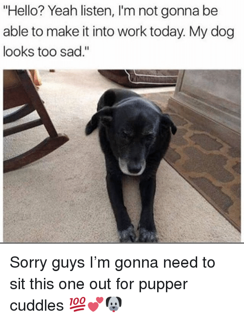 """Hello, Memes, and Sorry: """"Hello? Yeah listen, I'm not gonna be  able to make it into work today. My dog  looks too sad."""" Sorry guys I'm gonna need to sit this one out for pupper cuddles 💯💕🐶"""