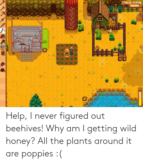 Poppies: Help, I never figured out beehives! Why am I getting wild honey? All the plants around it are poppies :(