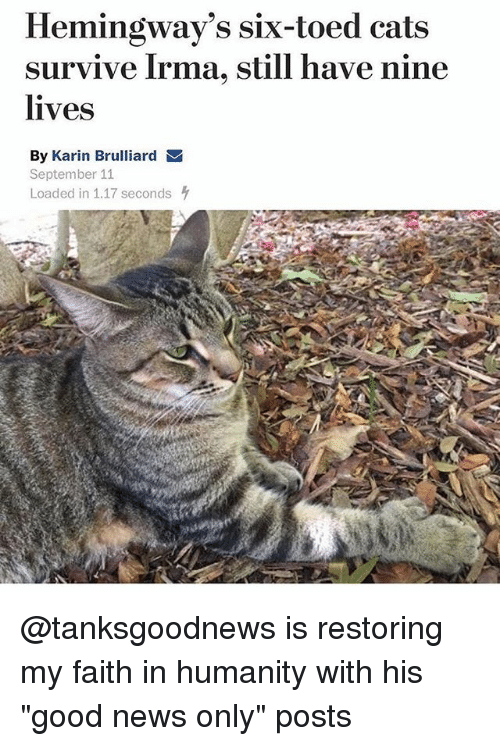 "Cats, Funny, and News: Hemingway's six-toed cats  survive Irma, still have nine  lives  By Karin Brulliard  September 11  Loaded in 1.17 seconds @tanksgoodnews is restoring my faith in humanity with his ""good news only"" posts"