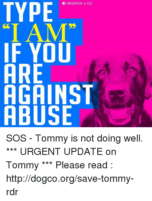"""tommys: HENDRICK & Co.  TYPE  """"I AM""""  IF YOU  ARE  AGAIN  ABUSE SOS - Tommy is not doing well. *** URGENT UPDATE on Tommy *** Please read : http://dogco.org/save-tommy-rdr"""
