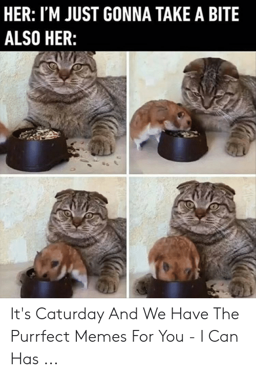 Caturday Meme: HER: I'M JUST GONNA TAKE A BITE  ALSO HER: It's Caturday And We Have The Purrfect Memes For You - I Can Has ...