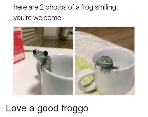 Dank Memes, Frog, and Frogs: here are 2 photos of a frog smiling.  you're welcome Love a good froggo