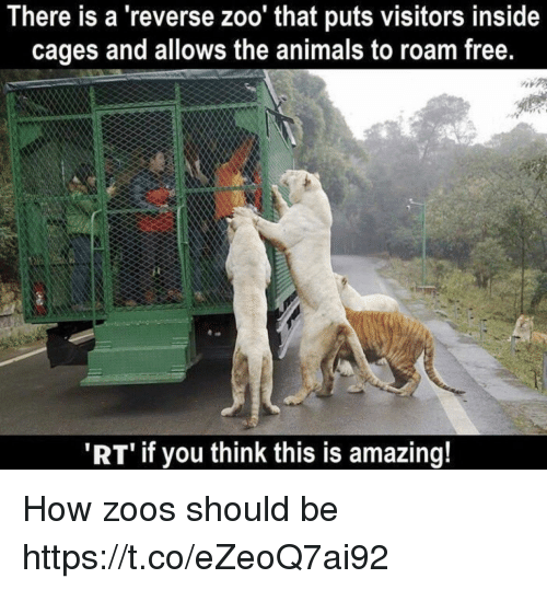 Animals, Memes, and Free: here is a 'reverse zoo' that puts visitors inside  cages and allows the animals to roam free.  'RT if you think this is amazing! How zoos should be https://t.co/eZeoQ7ai92