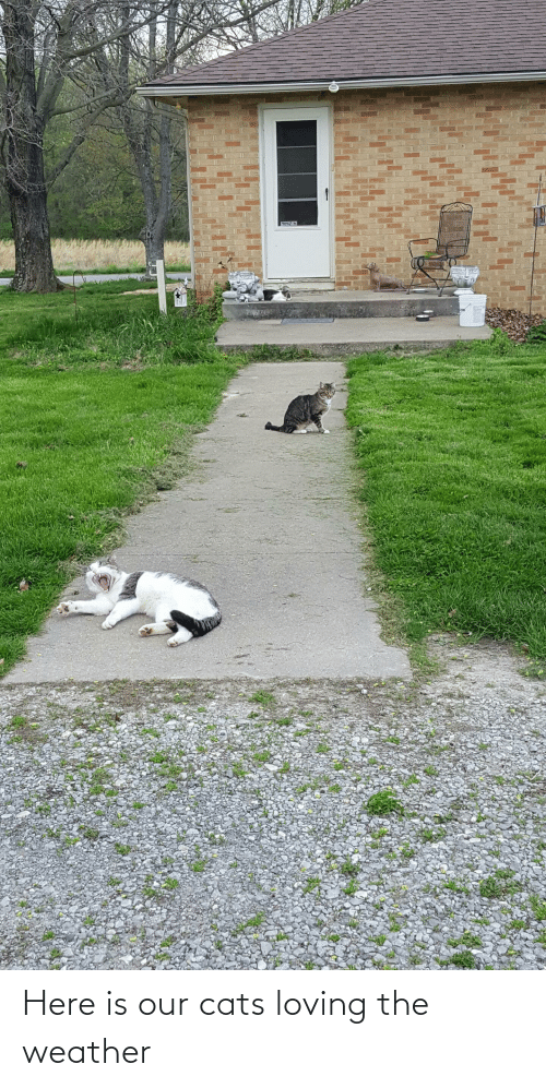 The Weather: Here is our cats loving the weather