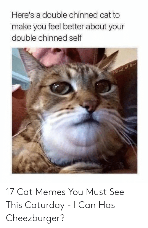Caturday Meme: Here's a double chinned cat to  make you feel better about your  double chinned self  Bae 17 Cat Memes You Must See This Caturday - I Can Has Cheezburger?