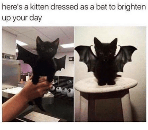 Bat, Kitten, and Day: here's a kitten dressed as a bat to brighten  up your day