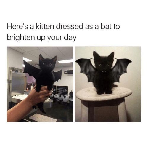 Adorable, Bat, and Kitten: Here's a kitten dressed as a bat to  brighten up your day Adorable kitten now