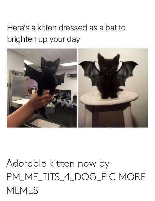 Dank, Memes, and Target: Here's a kitten dressed as a bat to  brighten up your day Adorable kitten now by PM_ME_TITS_4_DOG_PIC MORE MEMES