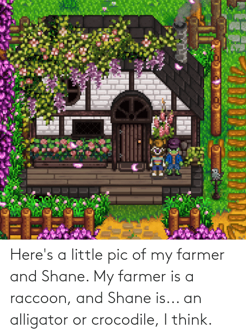 Shane: Here's a little pic of my farmer and Shane. My farmer is a raccoon, and Shane is... an alligator or crocodile, I think.