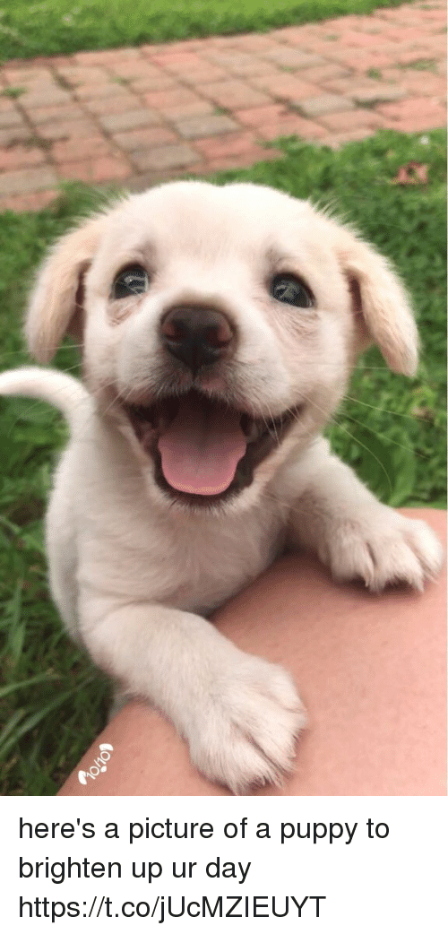 Puppy, Girl Memes, and A Picture: here's a picture of a puppy to brighten up ur day https://t.co/jUcMZIEUYT