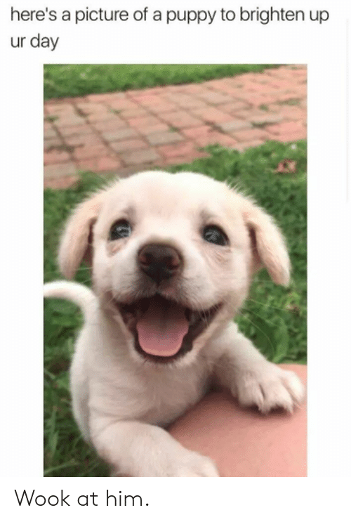 Dank, Puppy, and A Picture: here's a picture of a puppy to brighten up  ur day Wook at him.
