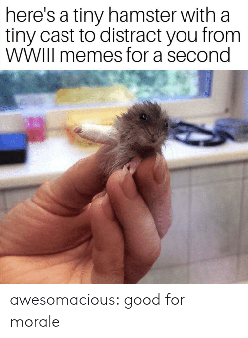 morale: here's a tiny hamster with a  tiny cast to distract you from  WWIII memes for a second awesomacious:  good for morale