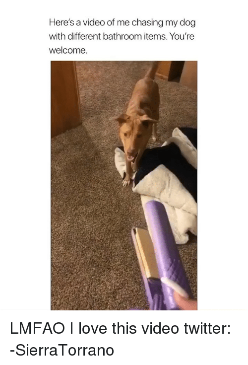 Love, Twitter, and Video: Here's a video of me chasing my dog  with different bathroom items. You're  Welcome. LMFAO I love this video twitter: -‪SierraTorrano ‬
