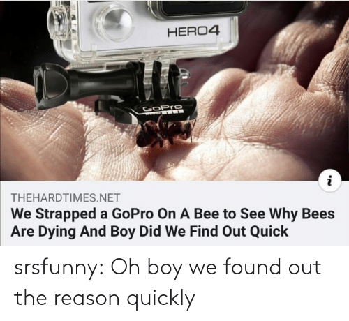 bee: HERO4  GoPro  THEHARDTIMES.NET  We Strapped a GoPro On A Bee to See Why Bees  Are Dying And Boy Did We Find Out Quick srsfunny:  Oh boy we found out the reason quickly