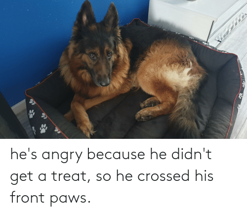 Paws: he's angry because he didn't get a treat, so he crossed his front paws.