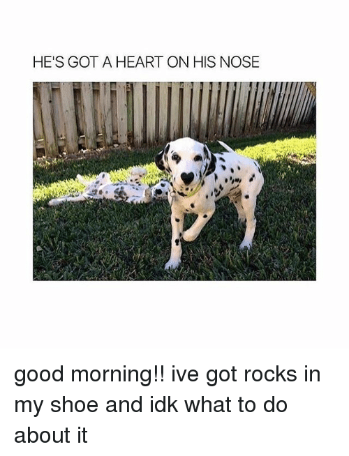 Memes, 🤖, and Shoe: HE'S GOT A HEART ON HIS NOSE good morning!! ive got rocks in my shoe and idk what to do about it