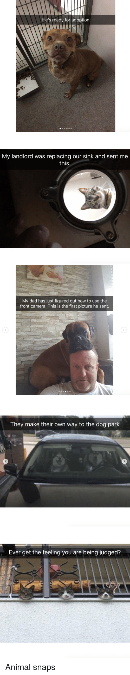 Hes Ready: He's ready for adoption   My landlord was replacing our sink and sent me  this  C)   My dad has just figured out how to use the  front camera. This is the first picture he sent.   They make their own way to the dog park   Ever get the feeling you are being judged? <p>Animal snaps<br/></p>