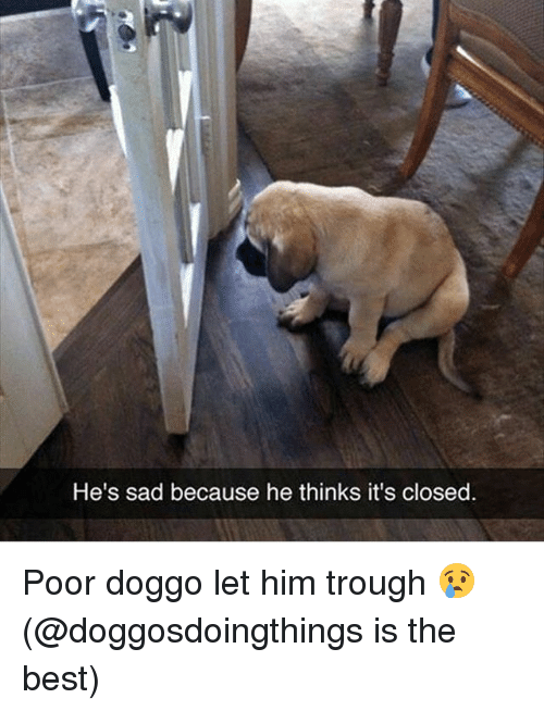 trough: He's sad because he thinks it's closed. Poor doggo let him trough 😢 (@doggosdoingthings is the best)