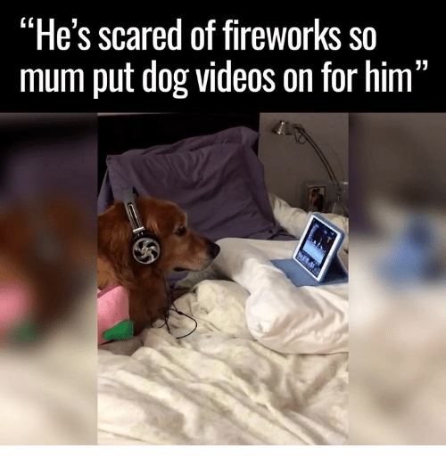 """Memes, Scare, and Videos: """"He's scared of fireworks so  mum put dog videos on for him  13"""