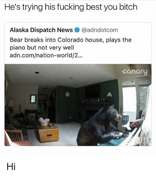 Bitch, Fucking, and News: He's trying his fucking best you bitch  Alaska Dispatch News@adndotcom  Bear breaks into Colorado house, plays the  piano but not very well  adn.com/nation-world/2...  canary Hi