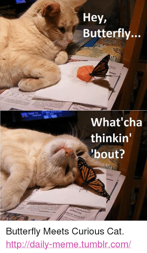 """curious cat: Hey,  Butterfly...  What'cha  thinkin'  bout?  tion <p>Butterfly Meets Curious Cat.<br/><a href=""""http://daily-meme.tumblr.com""""><span style=""""color: #0000cd;""""><a href=""""http://daily-meme.tumblr.com/"""">http://daily-meme.tumblr.com/</a></span></a></p>"""
