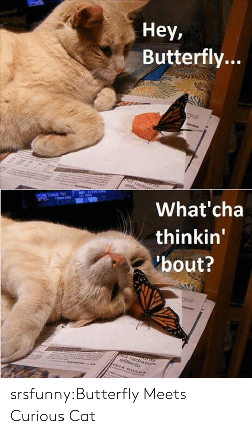 curious cat: Hey,  Butterfly...  What'cha  thinkin'  bout?  tion srsfunny:Butterfly Meets Curious Cat