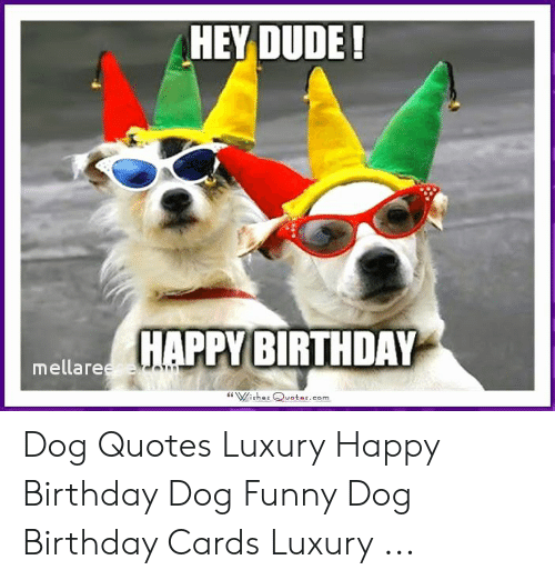 25 Best Memes About Happy Birthday Dog Funny Happy Birthday Dog Funny Memes