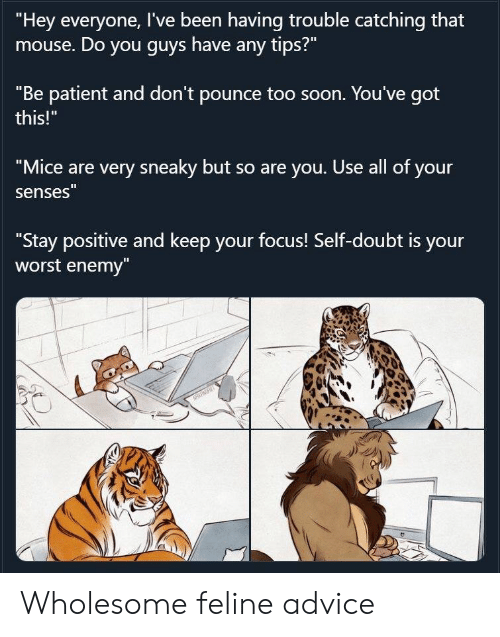"Mouse: ""Hey everyone, I've been having trouble catching that  mouse. Do you guys have any tips?""  ""Be patient and don't pounce too soon. You've got  this!""  ""Mice are very sneaky but so are you. Use all of your  senses""  ""Stay positive and keep your focus! Self-doubt is your  worst enemy""  NRRT Wholesome feline advice"