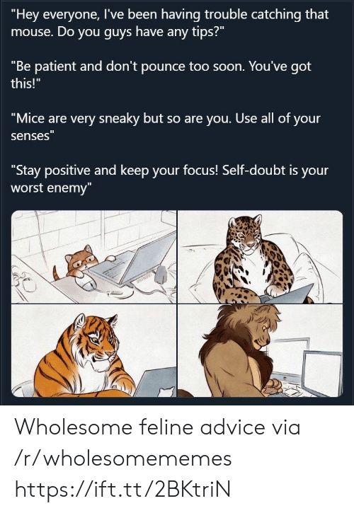 "Mouse: ""Hey everyone, I've been having trouble catching that  mouse. Do you guys have any tips?""  ""Be patient and don't pounce too soon. You've got  this!""  ""Mice are very sneaky but so are you. Use all of your  senses""  ""Stay positive and keep your focus! Self-doubt is your  worst enemy""  NRRT Wholesome feline advice via /r/wholesomememes https://ift.tt/2BKtriN"