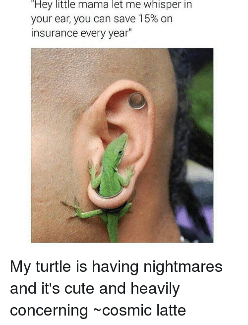 Turtling: Hey little mama let me whisper in  your ear, you can save 15% on  insurance every year My turtle is having nightmares and it's cute and heavily concerning ~cosmic latte